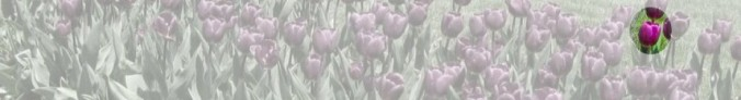 cropped-cropped-tulip-header12.jpg