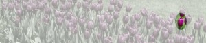 cropped-tulip-header11.jpg