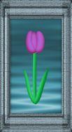Tulip Water