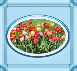 Mother's Day Tulips