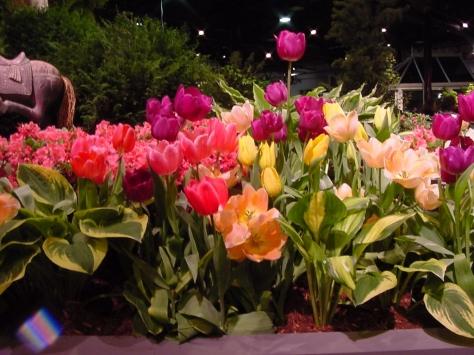 Tulips01