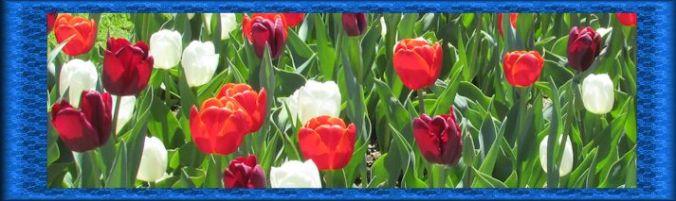 Tulip Sampler 01