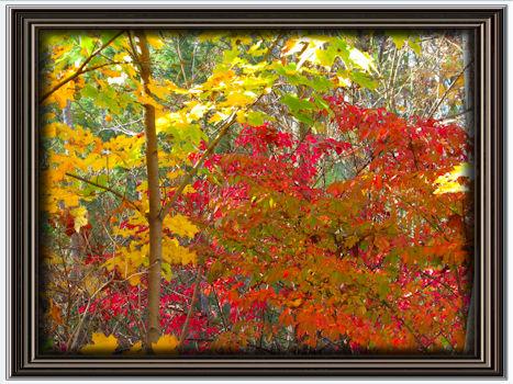 fall-sampler
