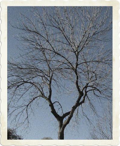 jude-12-tree