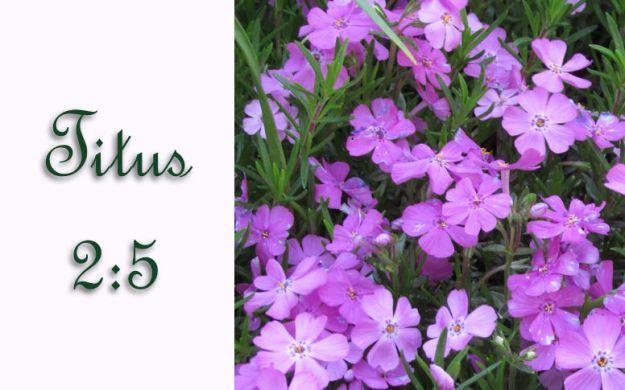 Titus 2 v 5