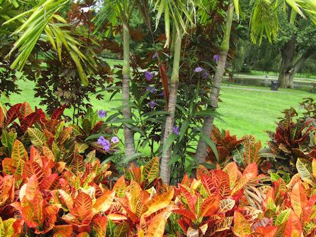 Fall Garden Sampler