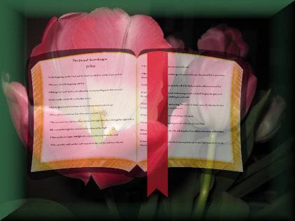 Tulip Bible