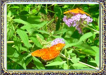 Forgiveness Butterfies
